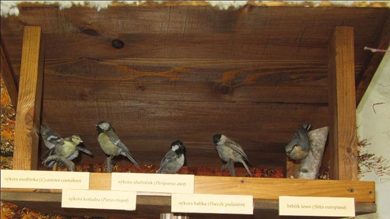Alena Korčeková - Ptáci na krmítku v naší výstavním síni KD
