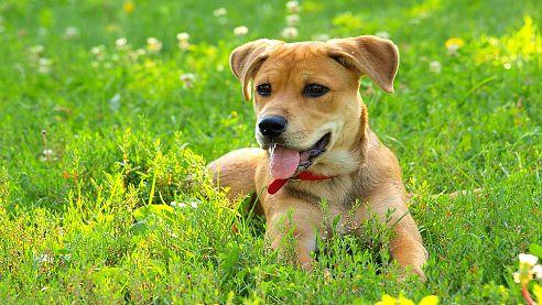 <span>Včera</span>: Očkování psů proti vzteklině
