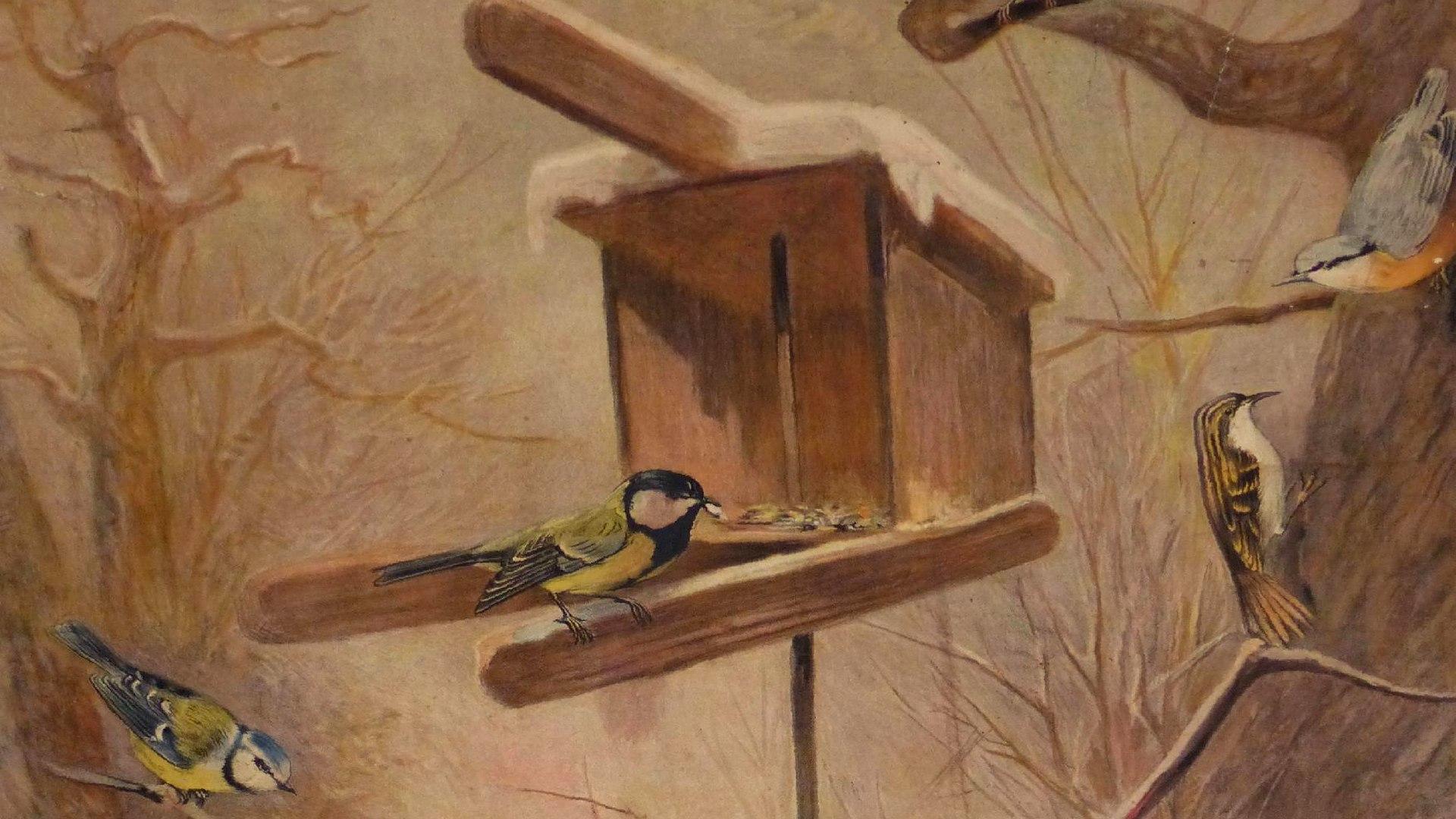 Archiv obce - Výstava Ptáci na krmítku